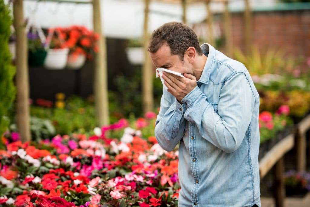 Acupuncture For Allergies And Sinus for Man at a greenhouse suffering from hay fever